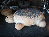 tortue-tortilla-etape-4-160