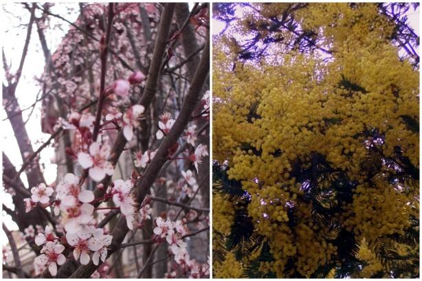 Ну наконец-то! Весна пришла!